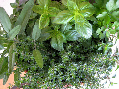 A close up of a herbs growing in pot