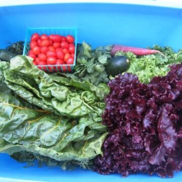 A blue box of fresh produce