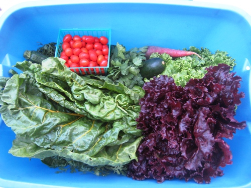 A blue box of fresh produce from CSA