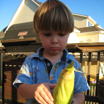 toddler boy with ear of corn on deck.