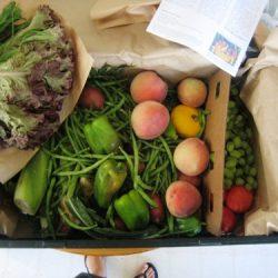 Abundant Harvest Organics week 1
