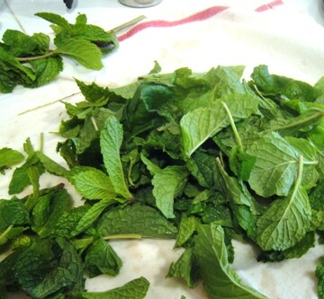 pile of mint leaves on a table