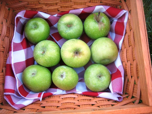 green apples in cloth lined wooden basket