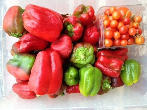 tray filled with peppers and tomatoes