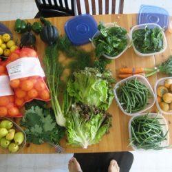 abundant harvest 11-7