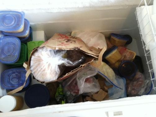 freezer prior to challenge