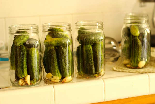 four mason jars with cucumbers and pickling ingredients inside
