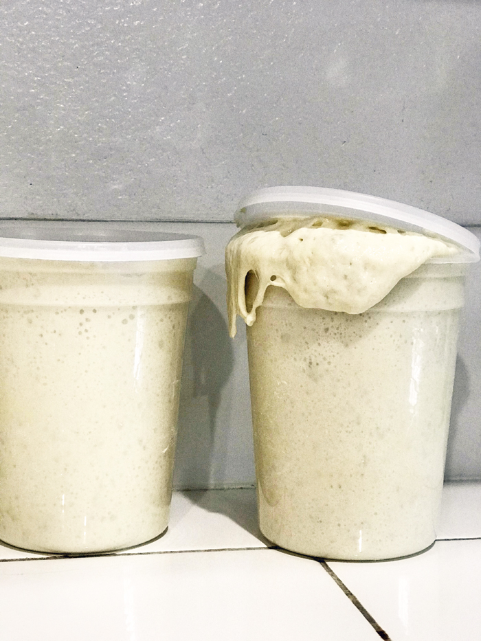 sourdough starter exploding out of container