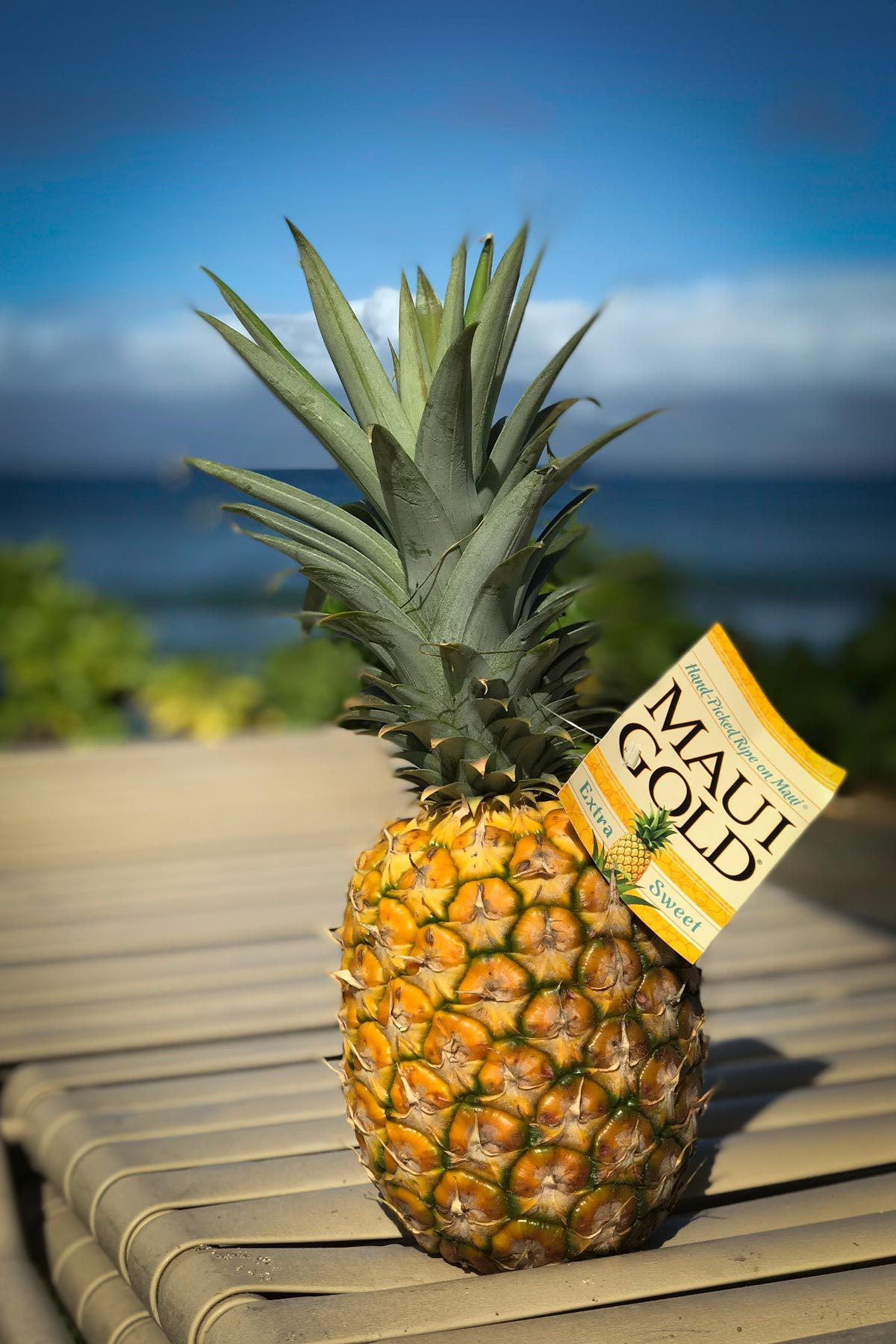Maui Gold pineapple on lounge chair with ocean and Moloka'i in distance