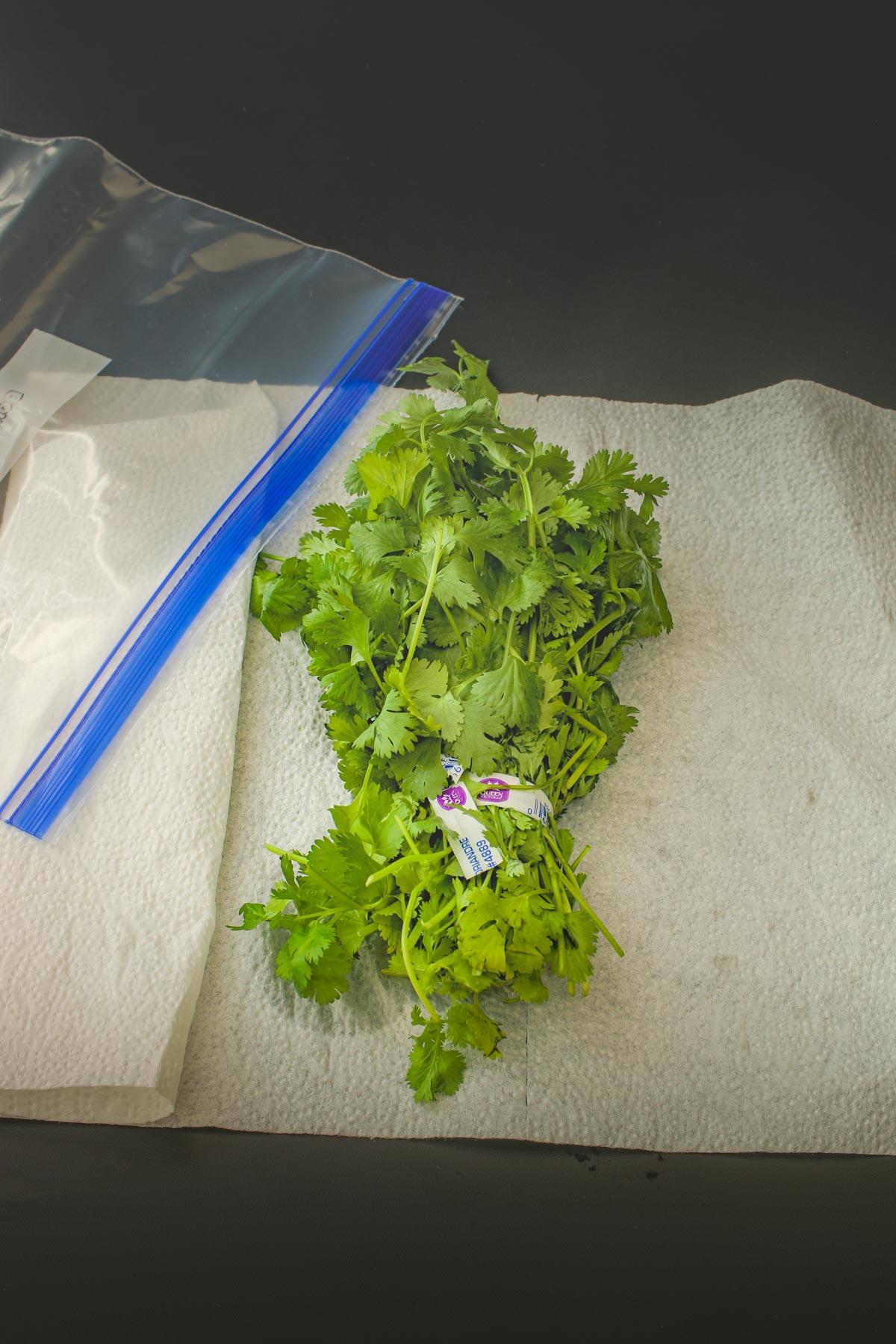 cilantro on paper toweling next to ziptop bag.