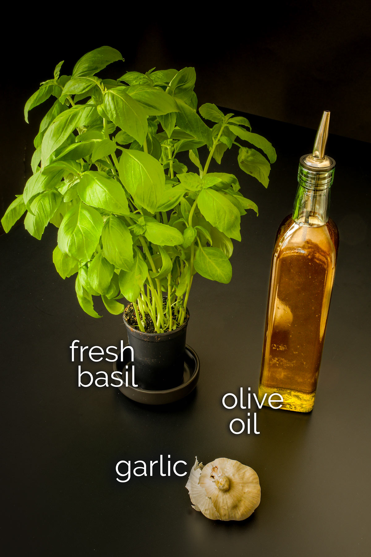 basil plant on table next to head of garlic and bottle of olive oil.